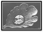 Dewdrop por M. C.Escher