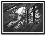 Puddle por M. C.Escher