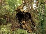 Into The Forest por Jill E. Ryan3