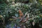 Into The Forest por Jill E. Ryan9