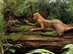 Into The Forest por Jill E.Ryan