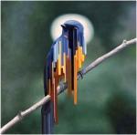 Bird rib por Maurizio Bongiovanni