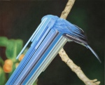 Bird rib 6 por MaurizioBongiovanni