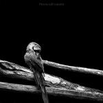 Black and White Zoo series por Nicolas Evariste 11