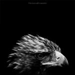 Black and White Zoo series por Nicolas Evariste 12