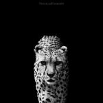 Black and White Zoo series por Nicolas Evariste 13