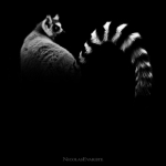 Black and White Zoo series por Nicolas Evariste 15