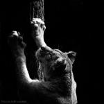 Black and White Zoo series por Nicolas Evariste 2