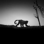 Black and White Zoo series por Nicolas Evariste9