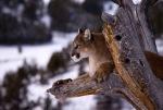 Jonathan Griffiths Wild Life Photography