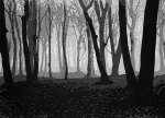 Woods in november – série pictures ofpaper