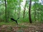 Helmut Smits Branded Wildlife3