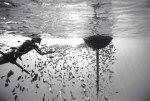 Black and White Underwater World por Wayne Levine7