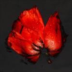 The Secret Life of Plants por Carsten Witte