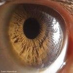 Your Beautiful Eyes por Suren Manvelyan3