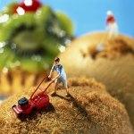 Akiko Lda e Pierre Javelle MiniatureArtwork