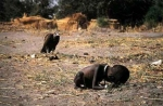 Kevin Carter Photowork