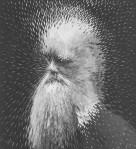 Lola Dupre's Charles Darwin Artwork