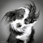 Carli Davidson Photowork4