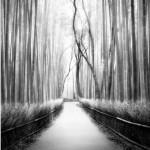 Peter Zeglis Photowork2