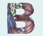 Animals in Alphabet by Casey Girard2