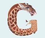Animals in Alphabet by Casey Girard4