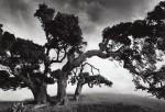 John Wimberley Photowork2