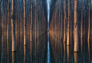 Oliver Delgado Photowork