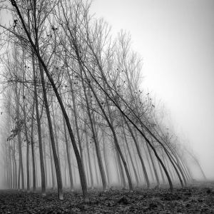 Pierre Pellegrini Photowork 4