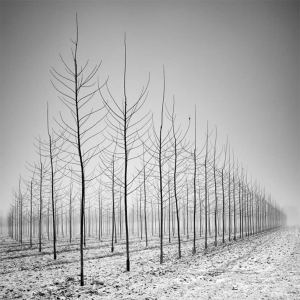 Pierre Pellegrini Photowork